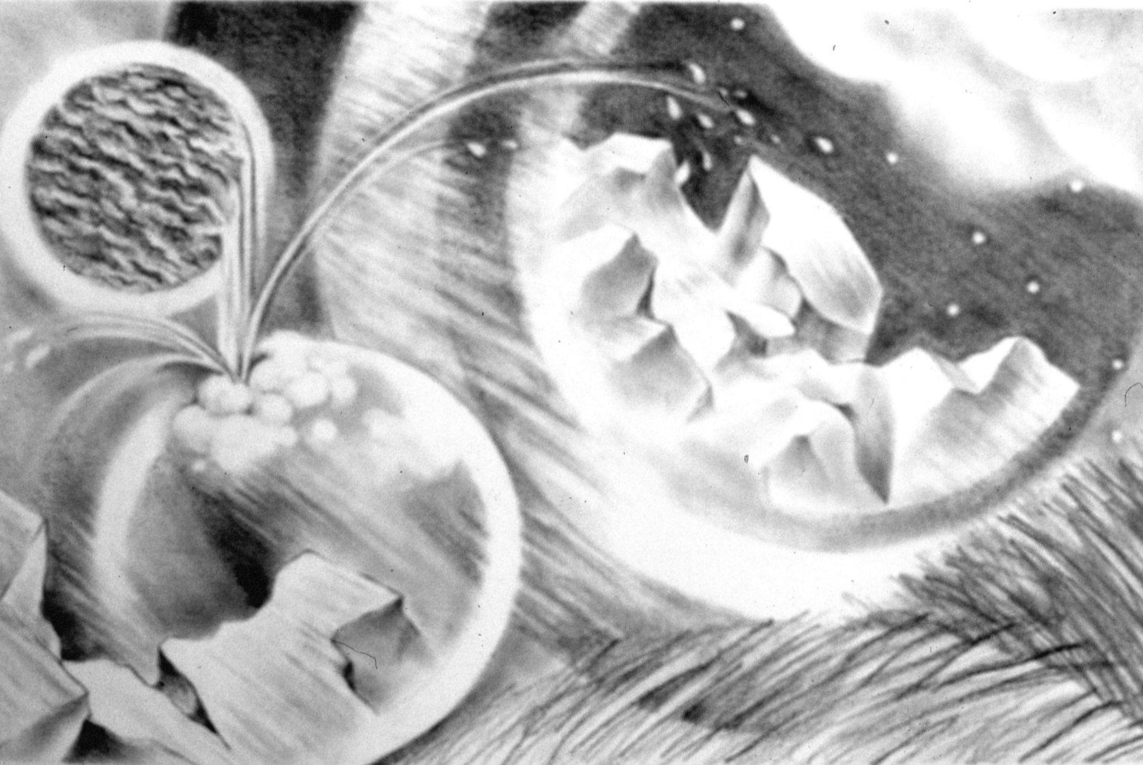 "Homage to Maya Lin's ""Ecliptic"", charcoal drawing, 15 x 24"""